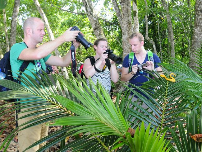 People Taking Pictures Yellow Snake Cahuita Beach np Costa Rica (c) 2015 Shangita Bose All Rights Reserved Snbcr Adventure Club