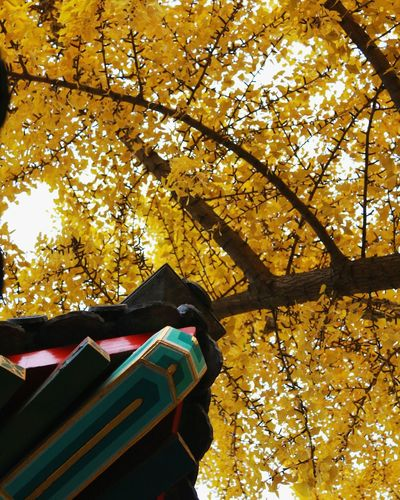 Autumn Tree No People Nature Close-up Low Angle View Change