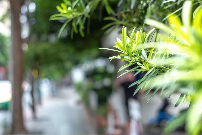 A beautiful in nature on pathway in a big city. Emotion blurred in background, focus on top of tree. No people on street in perspective view. Cityscape Copy Space Perspective Beauty In Nature Blurred Motion Branch Close-up Day Freshness Green Color Growth Landscape Leaf Nature No People Outdoors Pathway Plant Plant Part Selective Focus Street Top Of Tree Tranquility Tree Urban