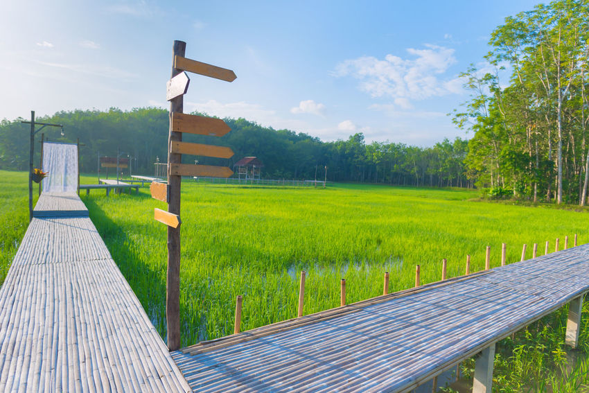 Nakhon Si Thammarat Beauty In Nature Cloud - Sky Day Field Grass Green Color Growth Landscape Nature No People Outdoors Scenics Sky Tranquility Tree