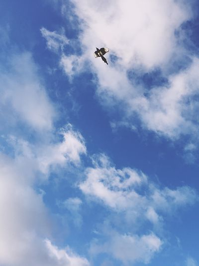 Low angle view of bird flying in cloudy sky