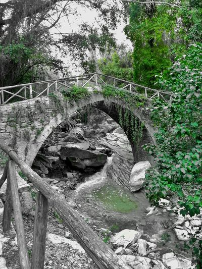 Green Green Leaves Forest Bridge Nature Photography Riverside Photography River Rocks Trees Filtered Image Away From The City No Civilization No Crowd