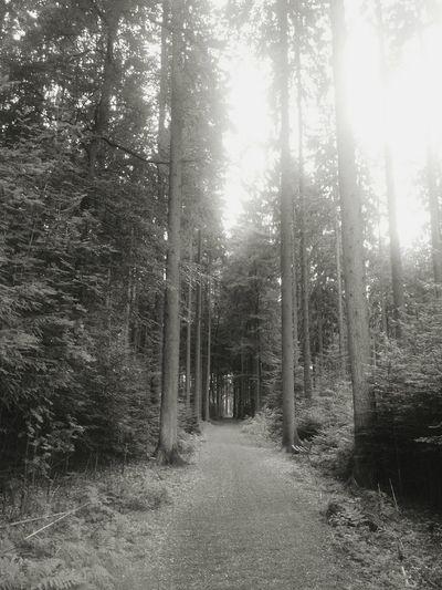 Forest Forestwalk Nature Summer Black And White Germany Hunsrück First Eyeem Photo