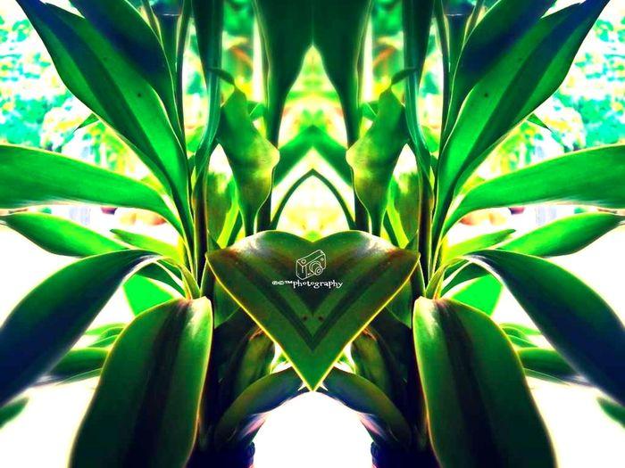 green creation....