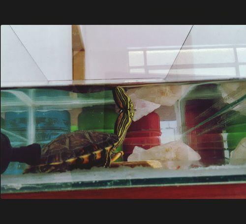 Colors Aquarium Turtle 🐢 Reptile Urban