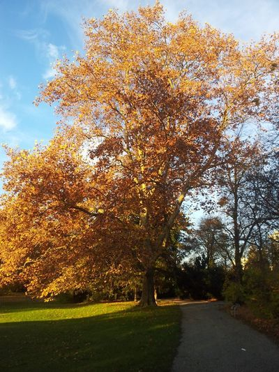 Tree Nature Outdoors Sky No People Autumn Day Beauty In Nature Growth Tranquility Grass