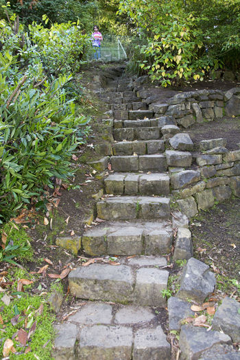 Botanic Garden old stairway steps Botanic Garden Day Growth Nature No People Outdoors Staircase Steps Steps And Staircases