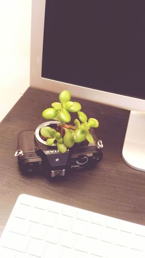 High Angle View Indoors  Green Color Flower Lovephotography  Riciclo Creativo Creation Greengrass Green Plant Green Green Green!  Creative Creation Recicled Ideas Succulent Plant Pentax Work My Working Desk Desk Plant Lieblingsteil
