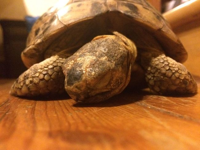 Turtle love Animal Animal Eating Animal Shell Animal Themes Animals In The Wild Animals Theme Close-up Cutness Green In The Wild Nature Nature Photography Nature_collection Naturelovers Pet Pet Photography  Pets Tortoise Turtle Turtle Cuteness Turtle Eating Turtle Love Turtle 🐢 Turtles Wildlife