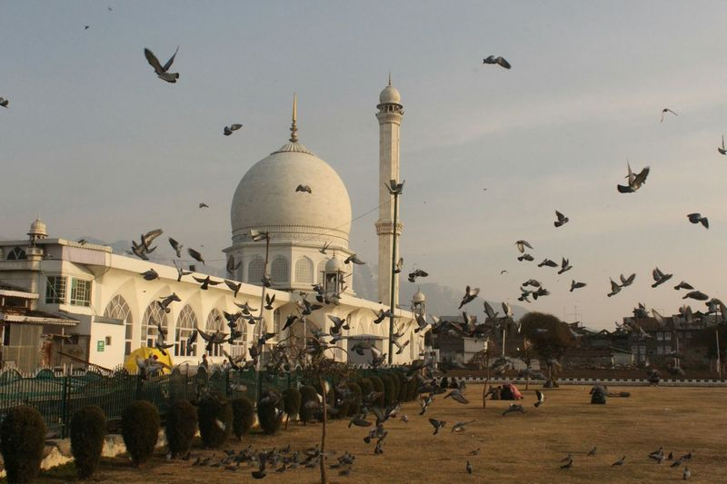 Flock of birds flying by temple against sky