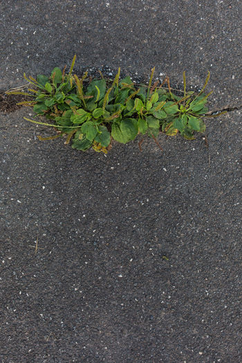 Close-up of plant on road