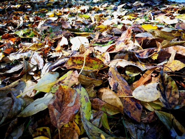 Leaf Nature Day EyeEm Nature Lover Autumn Mongolian Hello World Ulaanbaatar Beauty In Nature Mongolia Nature Of Beauty