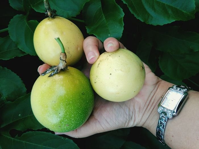 Human Hand Human Body Part Holding One Person Fruit Adults Only Food Green Color One Woman Only Only Women People Adult Close-up Real People Outdoors Healthy Eating Day Freshness