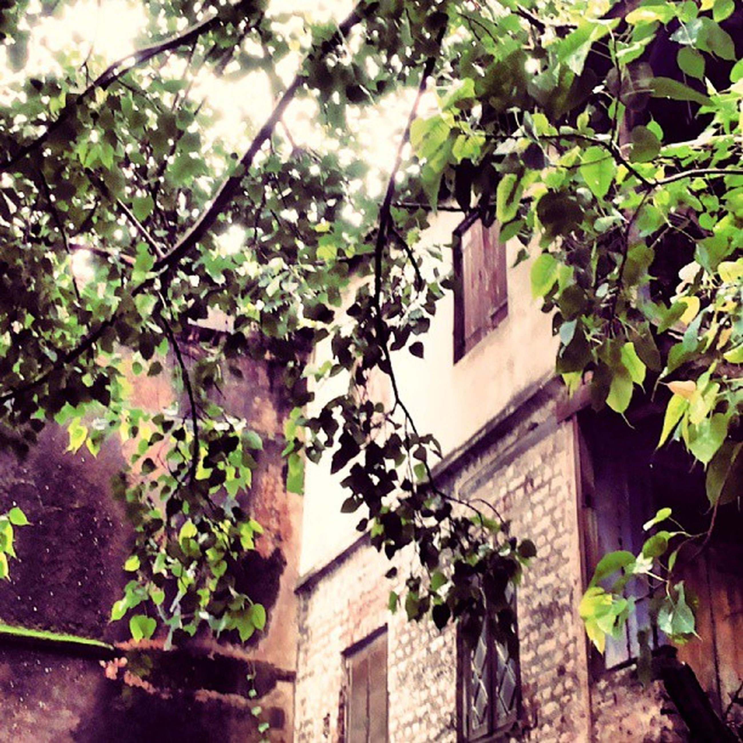 building exterior, architecture, built structure, growth, house, leaf, plant, low angle view, residential structure, tree, residential building, ivy, window, green color, branch, front or back yard, nature, potted plant, day, sunlight