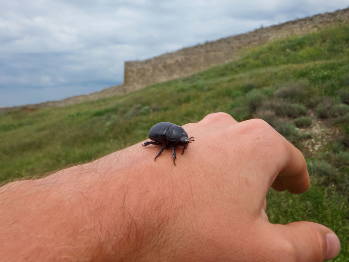 Person with insect on hand