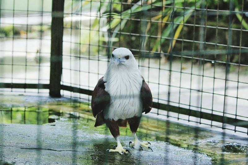 Portrait of a bird in zoo