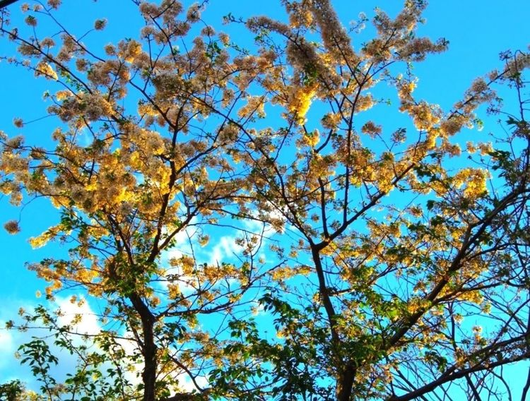 The Color of Life Flowers Japan Lookingup Light It Up Blue