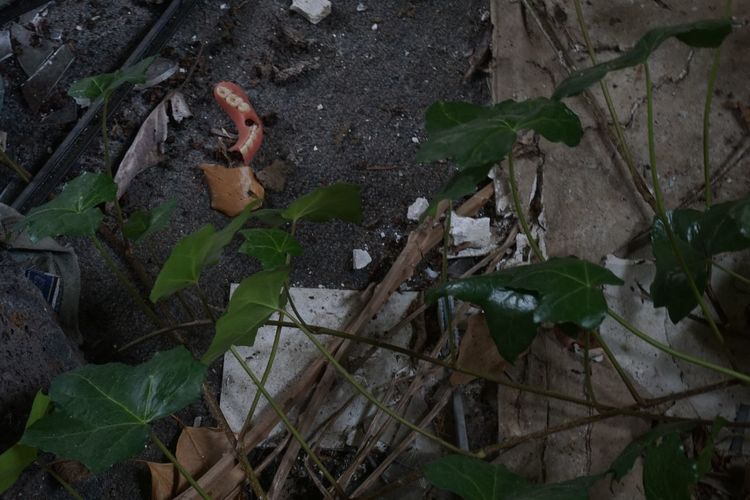 Abandoned House Found Object Urban Exploration Abandoned Dentures Growth Leaf No People Teeth
