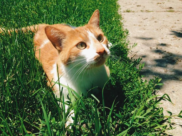 High angle view of cat sitting on grass in park