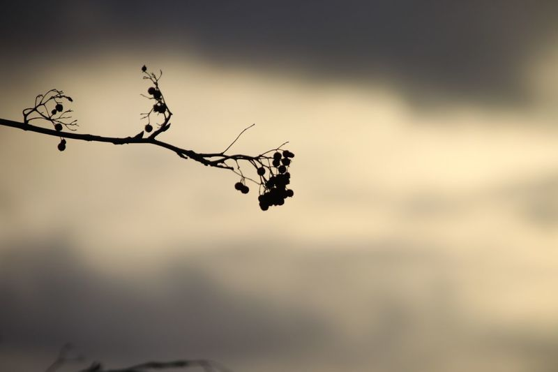 Focus On Foreground Plant Nature No People Tree Sky Close-up Beauty In Nature Outdoors Day Silhouette Fragility Branch Growth