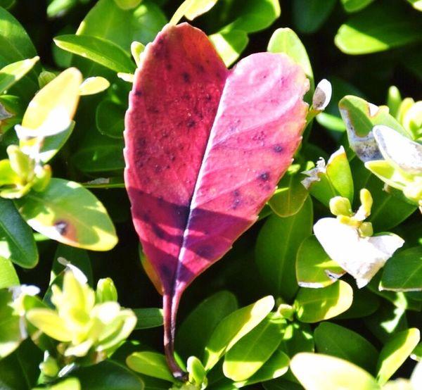 Treasure of nature Leaf Beauty In Nature Close-up Beauty In Nature Nature