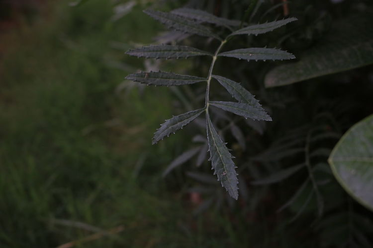 Close-up of plant during winter