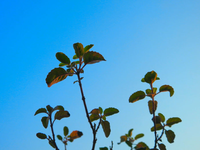 Low angle view of plants growing against sky