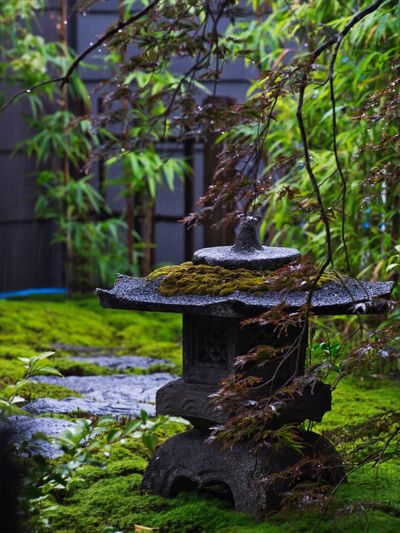 Rainy season now☔️ Wet Simple Quiet Love Japan M.ZUIKO DIGITAL OM-D E-M5 MarkⅡ Olympus The Great Outdoors - 2018 EyeEm Awards Garden Rain Rock - Object Tranquil Scene Tranquility Moss Beauty In Nature Nature Plant Tree Day No People Outdoors Green Color Japanese Garden
