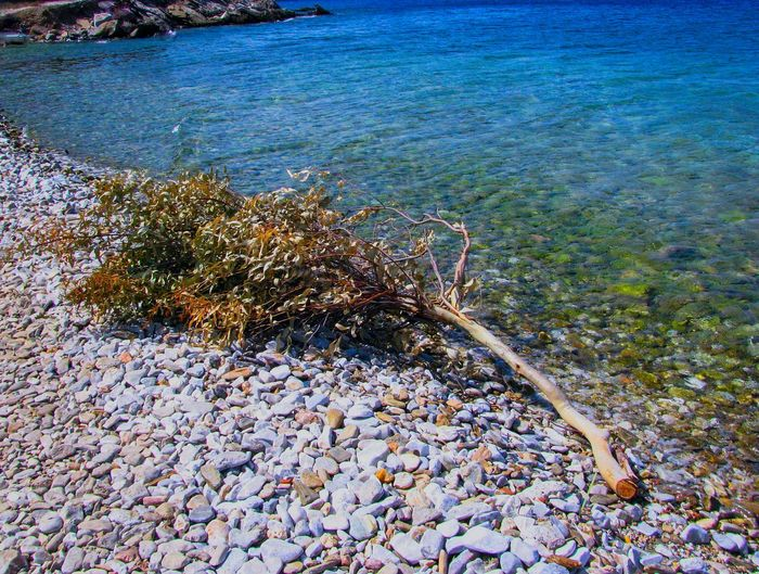 tree branch on a beach Tree Branch  Beach Blue Blue Sea Pebbles Pebble Beach Water Sea Beach