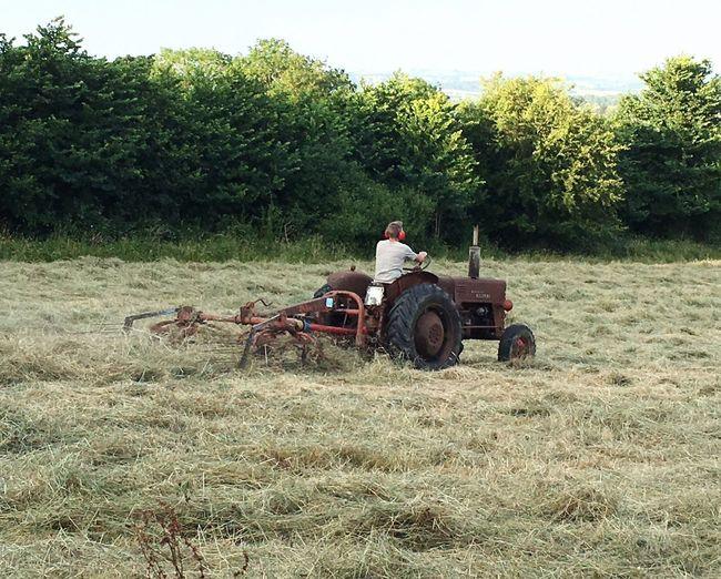 Harvest Hay Old