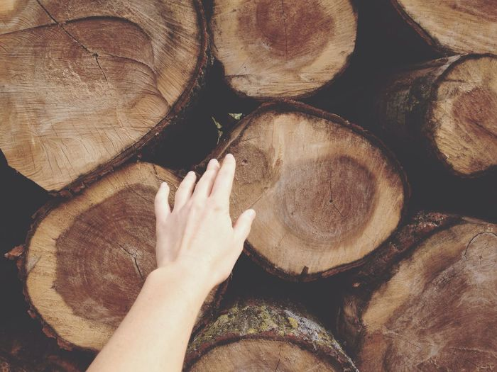Cropped hand of woman touching logs
