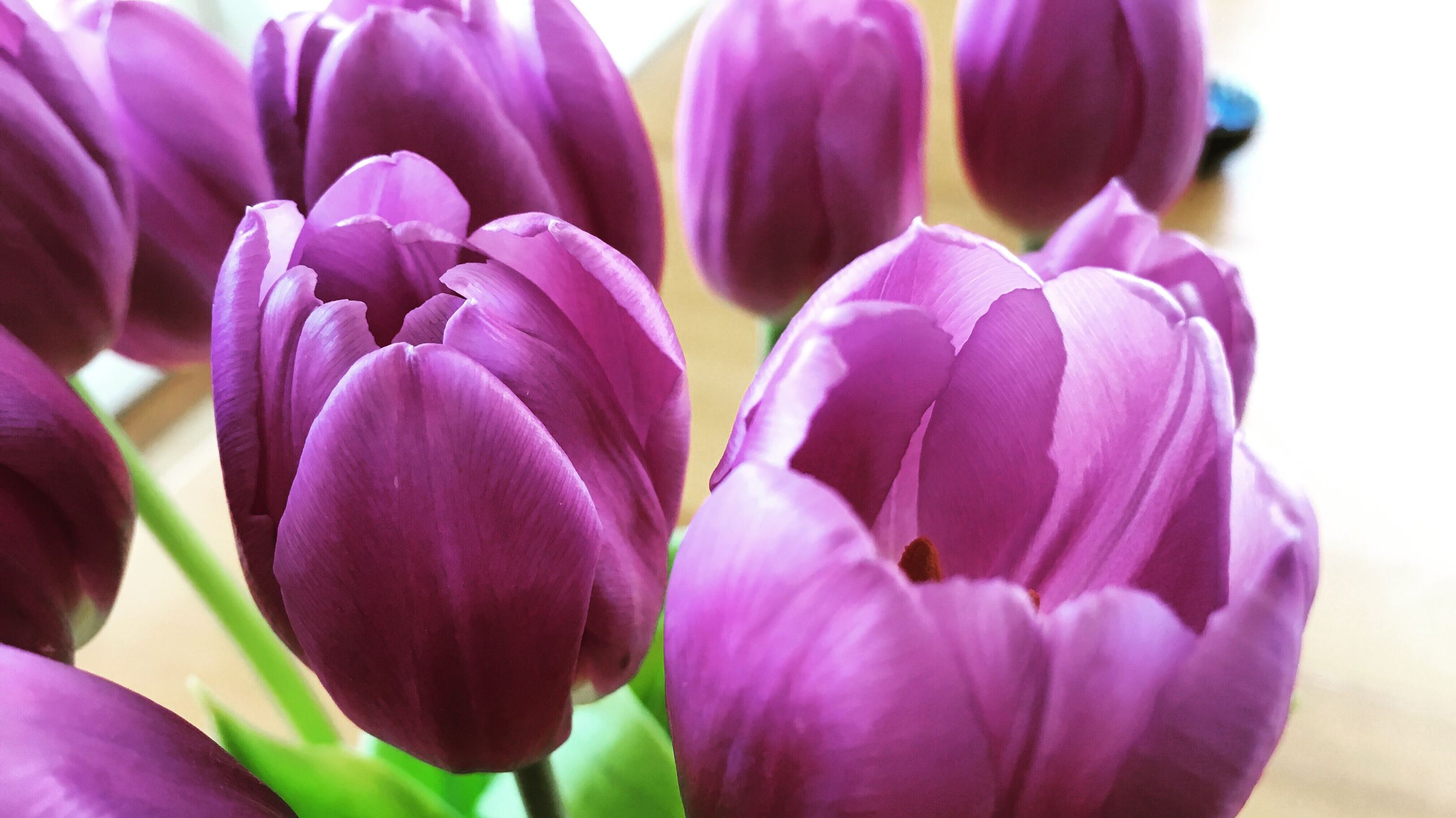 flower, beauty in nature, fragility, petal, nature, freshness, purple, growth, flower head, pink color, close-up, blooming, plant, no people, orchid, outdoors, day, crocus