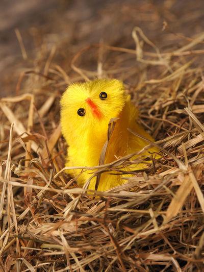 Close-up of artificial bird in nest