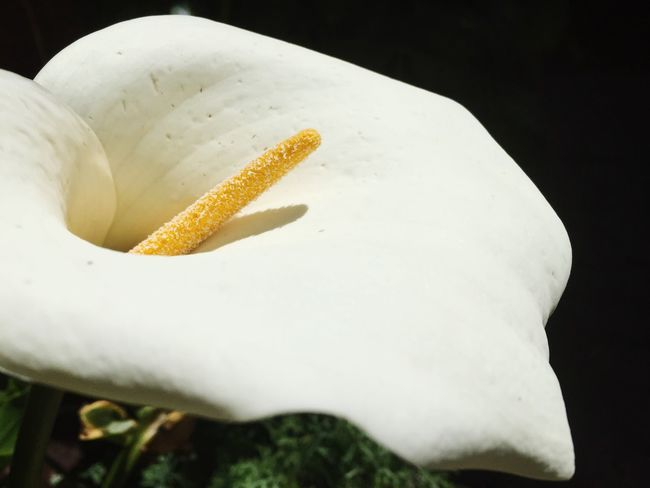 Some Flower
