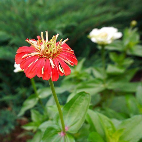 Flowering Plant Flower Plant Freshness Beauty In Nature Fragility Vulnerability