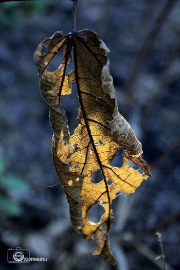 Usphotography Unmeshshirsath Leaves Dryleaf