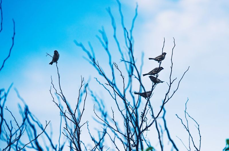 Sky Plant Bird Vertebrate Low Angle View Animals In The Wild Bare Tree Tree Outdoors Beauty In Nature Nature