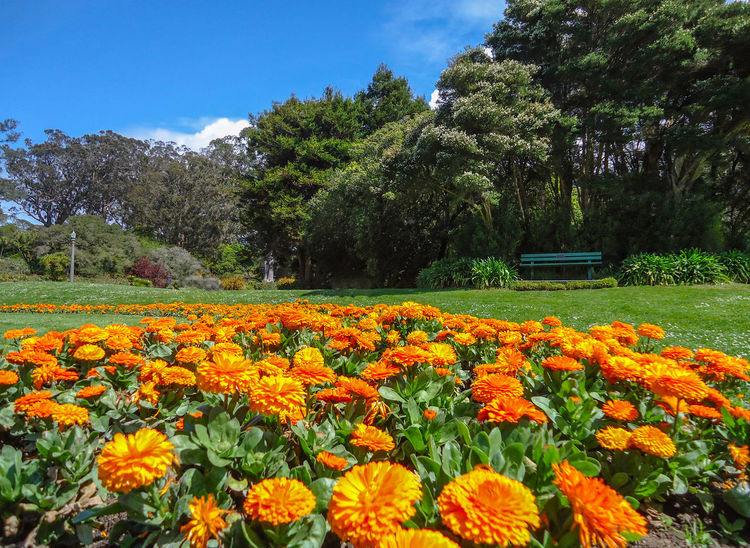 Colors Flowers Outdoors Park San Francisco Streetphotography Sunny Day Vivid