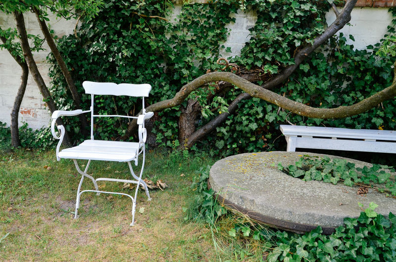 Empty chair and ivies at yard