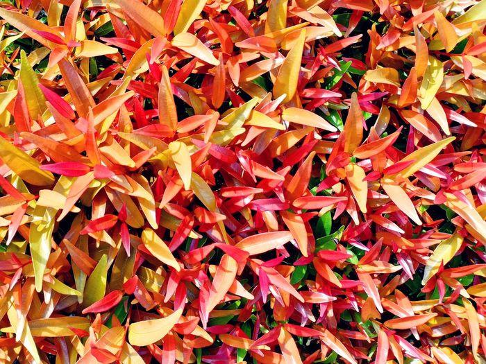 Fresh Leaf Leaf