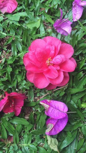 Flowers Meu Quintal Meu Lugar Meu Lar Inlove♥