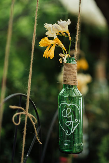 Bottle Art String Yellow Flower Art Beauty In Nature Botany Close-up Day Decoration Flower Flower Head Focus On Foreground Fragility Freesia Freshness Green Bottle Green Color Growth Leaf Nature No People Outdoors Plant Yellow