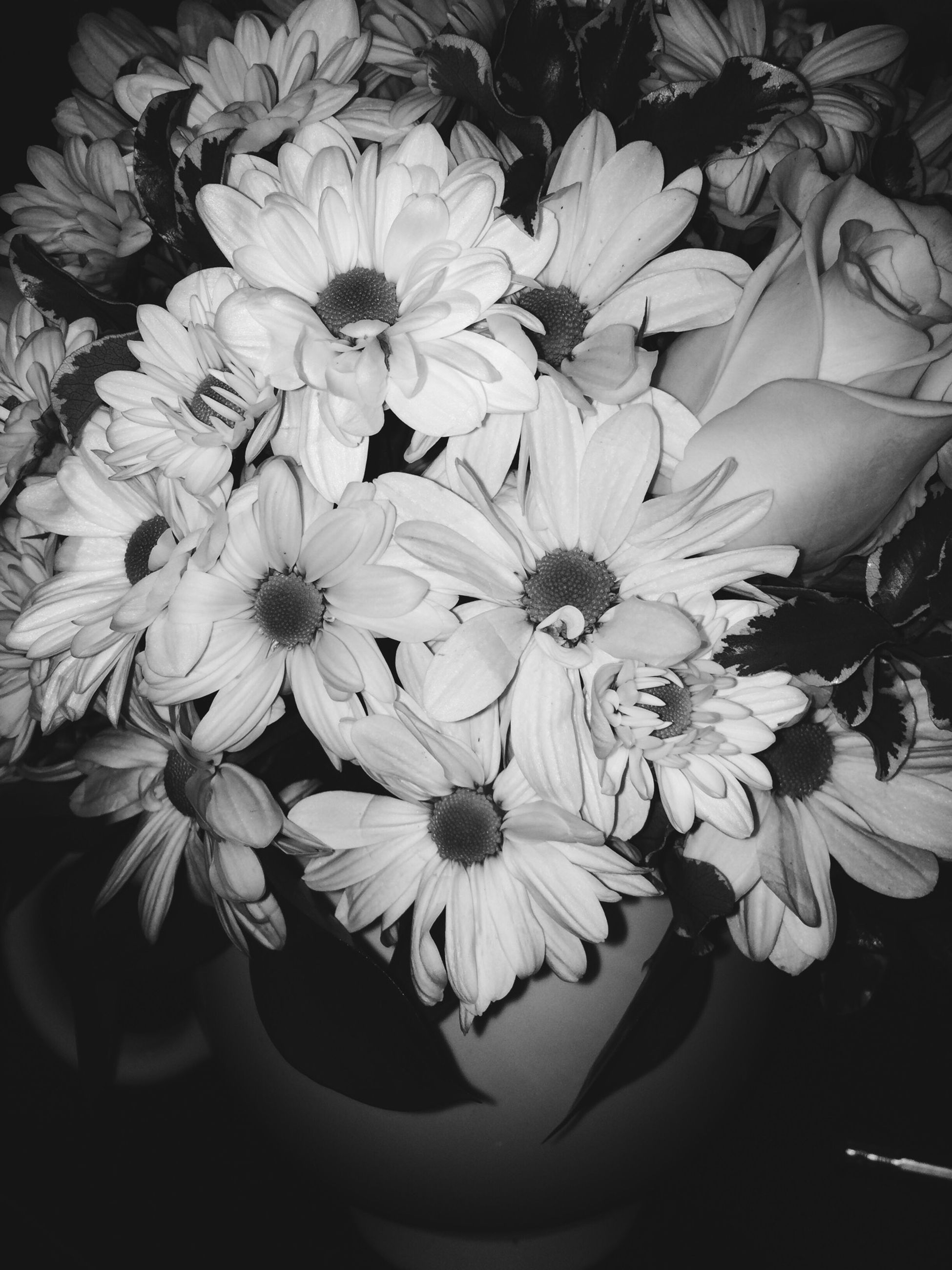flower, petal, freshness, flower head, fragility, growth, beauty in nature, close-up, blooming, plant, white color, nature, indoors, blossom, in bloom, high angle view, pollen, bunch of flowers, no people, botany