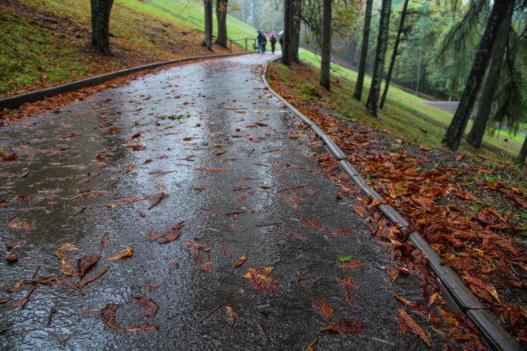 Wet Track Leaves Wet Wet Wet Wet Day Wet Park Trees Raining Day Rain Season  Paints Brown Paints Of Autumn Autumn All Paints Of Autumn Green