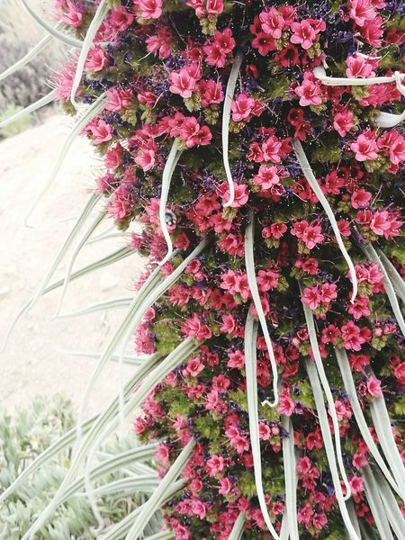Tajinaste Canarias Teide Photograpy Beauty In Nature No People Plant Flower Nature Pink Violet Green Flowers,Plants & Garden