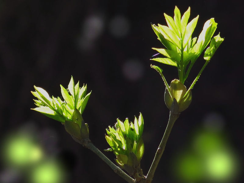 Backlit Beauty In Nature Black Background Botany Bud Freshness Green And Black Light And Shadow New Life Outdoors Plant Life Selective Focus Sprout