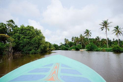 Boat Tour through Negombo. Boat Jungle Nature Negombo No People Palm Trees River Sea Sri Lanka Tree Water