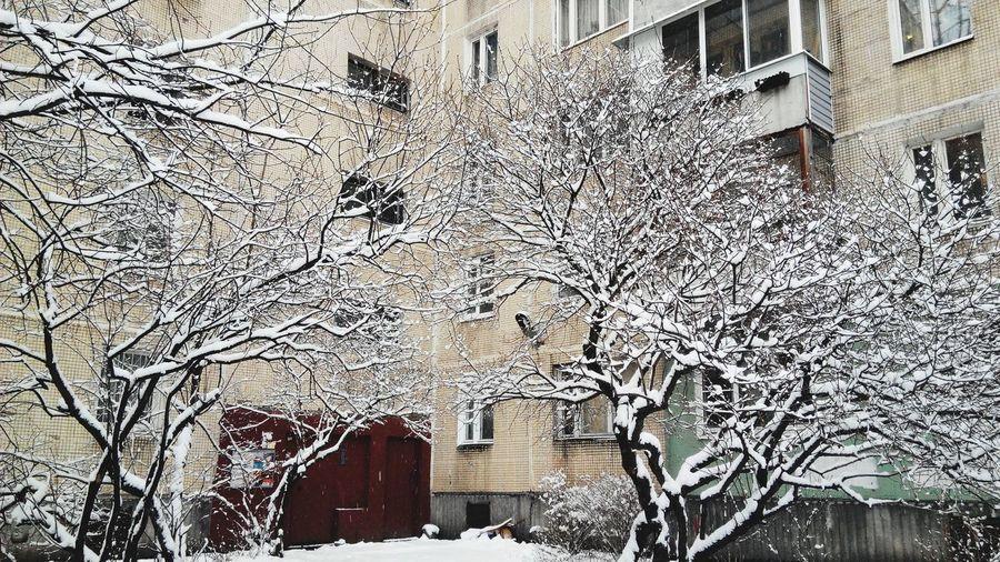Winter Trees Home Light Saint-Petersburg