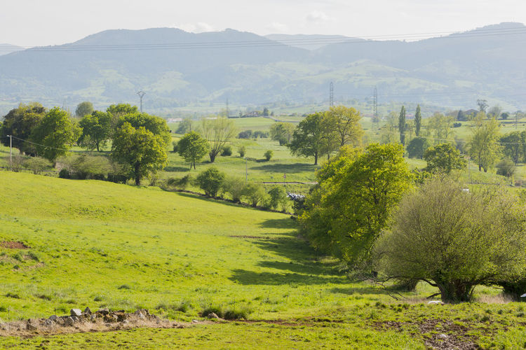 Cantabria Country Green Nature SPAIN Beauty In Nature Day Field Grass Green Color Growth Landscape Mountain Nature No People Outdoors Scenics Sky Skycollection Tranquil Scene Tranquility Tree