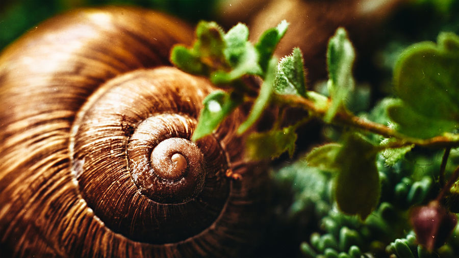 20190427 - Snail Close-up Animal Wildlife Gastropod No People Shell Animal Snail Spiral Animals In The Wild Mollusk Invertebrate Animal Shell Selective Focus Animal Themes Plant Green Color One Animal Day Nature Leaf Snail Snail🐌 Snails Snail Collection Snailshell Snails🐌 Snails Pace Snails Having Fun Nature Springtime Rain Rainy Days Rainy Day Rainy Days☔ Rainy Day Photography Garden Garden Photography Animals In The Wild